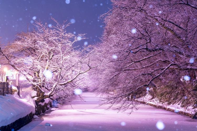 弘前公園冬のライトップ