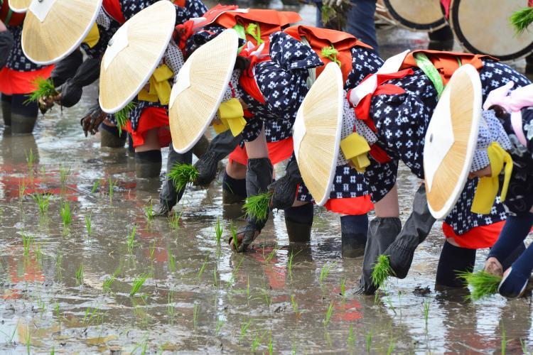 お田植祭り(伊佐須美神社)