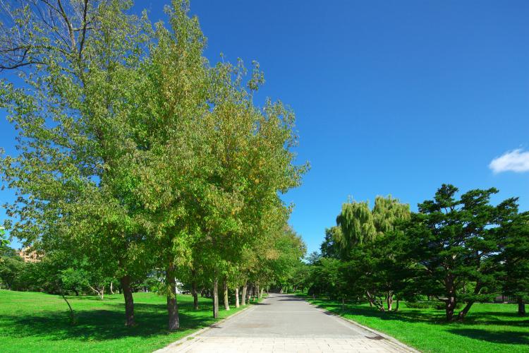 中島公園(豊平館)