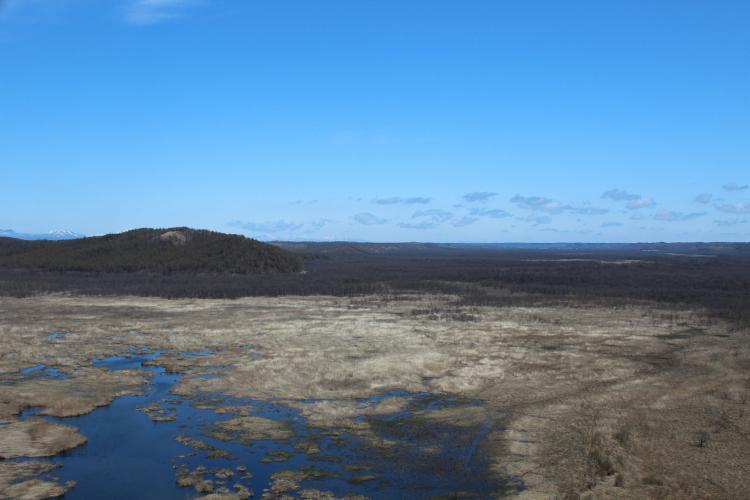釧路湿原(コッタロ湿原展望台)