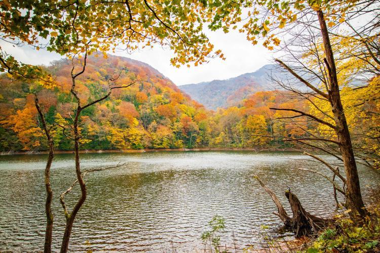 十二湖(白神山地)