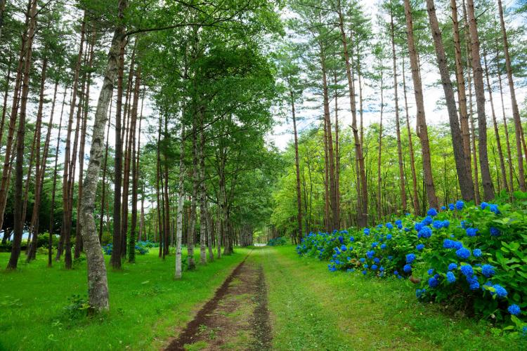 岩手県民の森