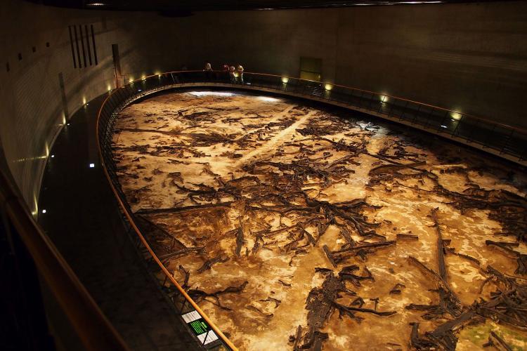 地底の森ミュージアム