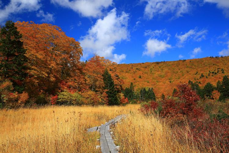 八幡平山頂自然探勝路