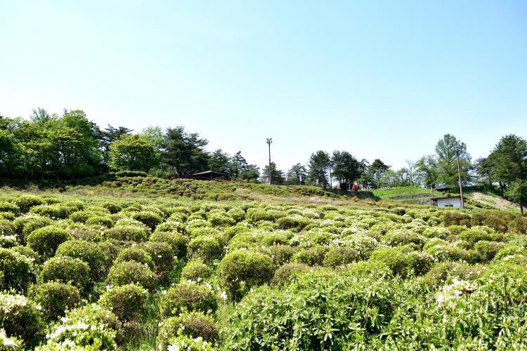 寒河江公園