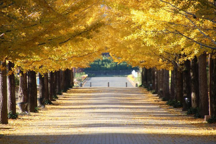 福島県あづま総合運動公園