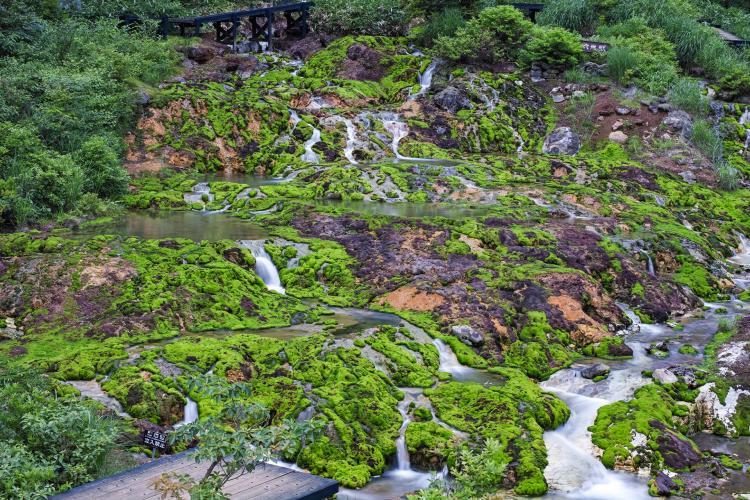 チャツボミ苔公園