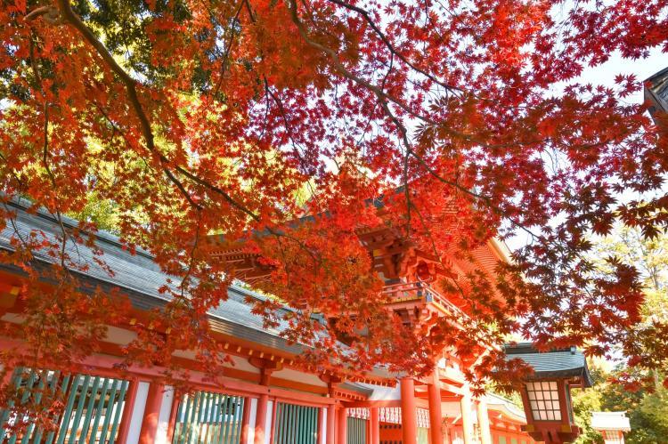 武蔵一宮氷川神社(大宮氷川神社)
