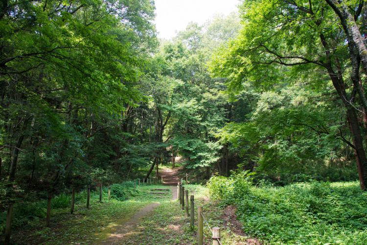 トトロの森(狭山丘陵)