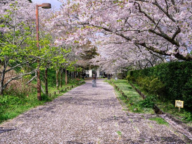 館山城(城山公園)