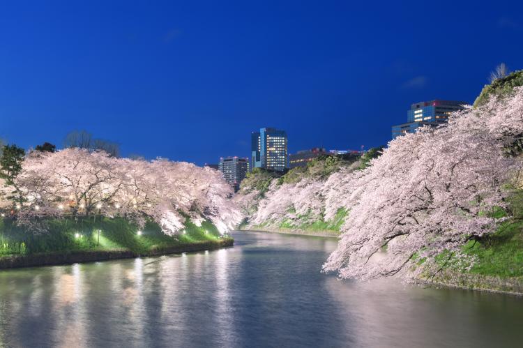 千鳥ヶ淵(日本武道館・北の丸公園)