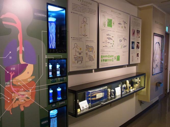 目黒寄生虫博物館