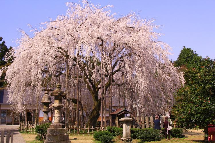 足羽山公園