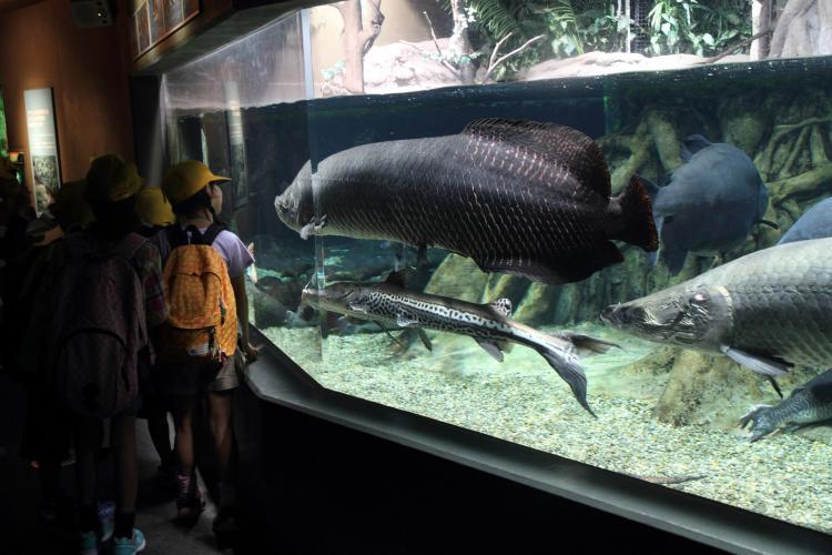 世界淡水魚園水族館アクア・トトぎふ