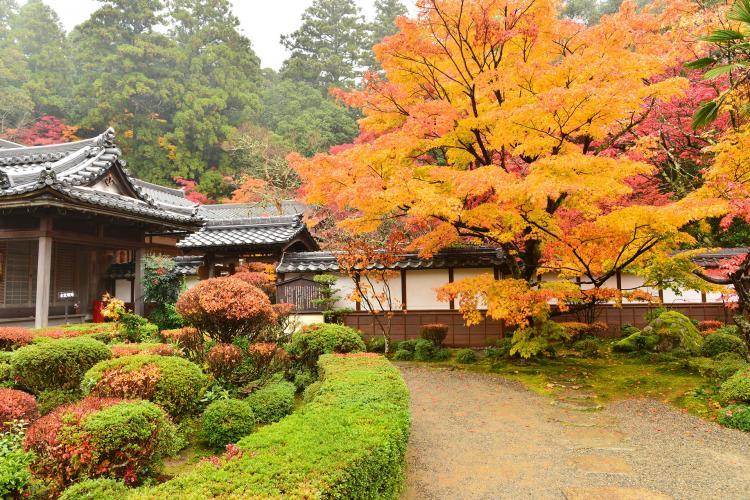 西明寺(池寺・湖東三山)