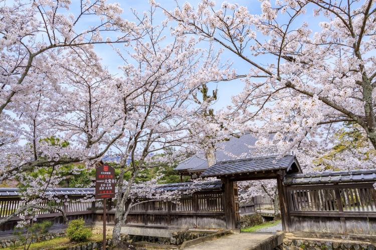 大覚寺(旧嵯峨御所)
