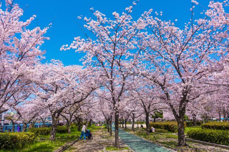 毛馬桜之宮公園(桜之宮公園)