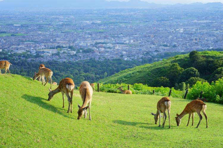 若草山(奈良公園)