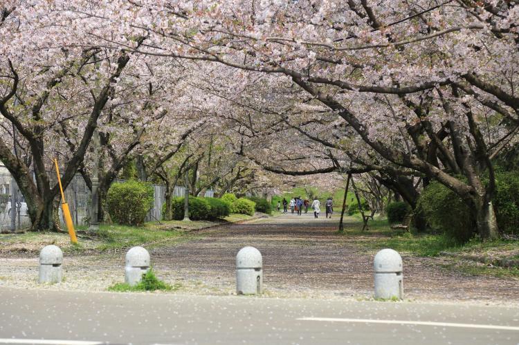 福岡城跡(舞鶴公園)